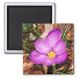 Floral Magnet