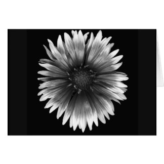Floral Note Card of  Fiery Silver Daisy
