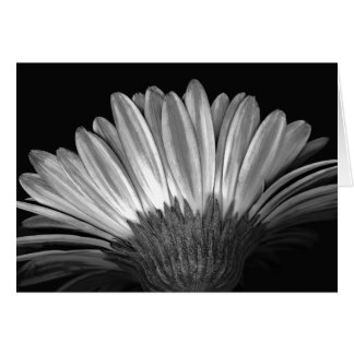 Floral Note Card of Silver Gerbera Daisy
