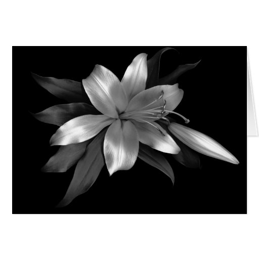 Floral Note Card Silver Stargazer Lily