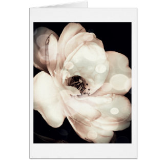 Floral Note card, White Rose in Sepia Card
