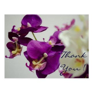 Floral -Orchid Postcard