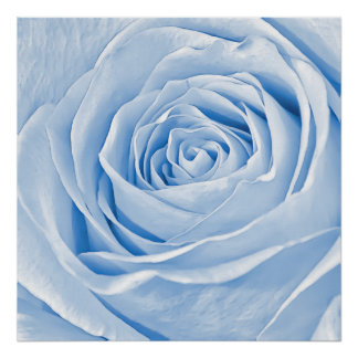 Floral Photo Dainty Light Blue Rose Print