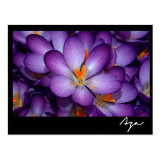 Floral Photo Still Life. Postcard