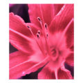 floral photoenlargement