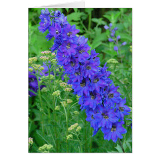 FLORAL (PHOTOG) NOTECARDS , BLUE DELPHINIUM STATIONERY NOTE CARD