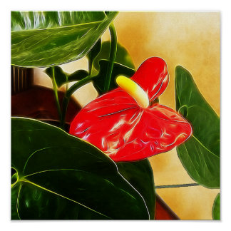 Floral Photography of Single Red Anthurium Blossom Poster