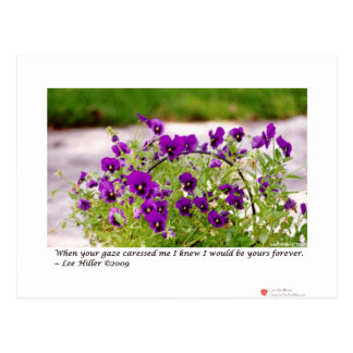 Floral Photography (Pansies) Gifts & Collectibles Postcard