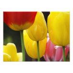 Floral Photography prints Tulip Flowers Nature Photo Print
