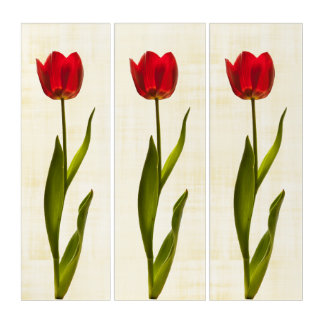 Floral Photography Red Tulip Pic in Modern Art