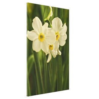 Floral Photography:  White Spring Narcissus Canvas Print