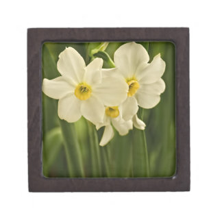 Floral Photography:  White Spring Narcissus Keepsake Box