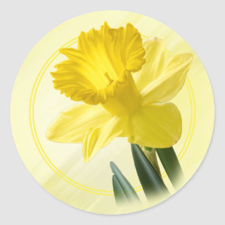 Floral Photography Yellow Daffodil Nature Pic Classic Round Sticker