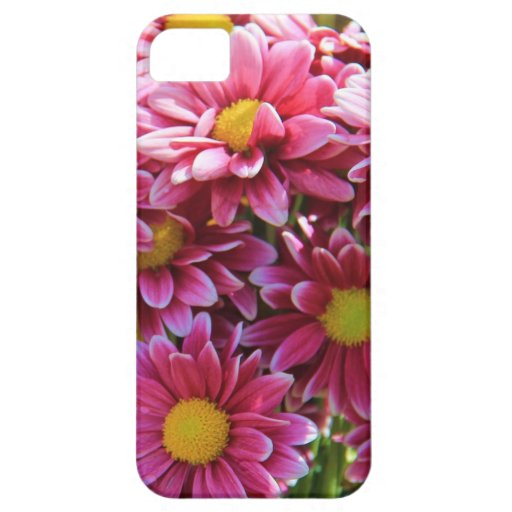 Floral, Pink Chrysanthemums, yellow center iPhone 5 Covers