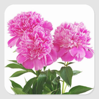 Floral Pink Fuchsia Peony Flower Bouquet Square Sticker