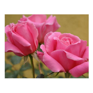 Floral Pink Rose Flower - Hello, Love, Thank You Postcard