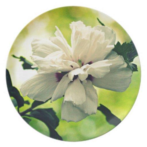 Floral Platos Para Fiestas