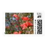 Floral Postage Stamp