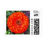 Floral Postage Stamps - Orange Floral Zinnia