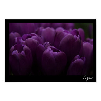 Floral purple tulips poster