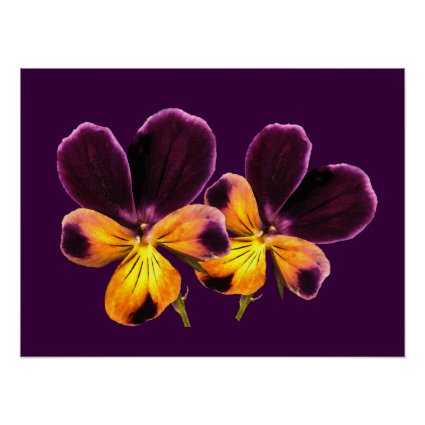 Floral Purple Yellow Pansy Flowers Poster