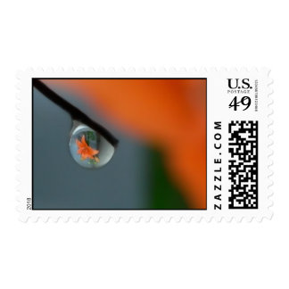 Floral - reflection in water postage
