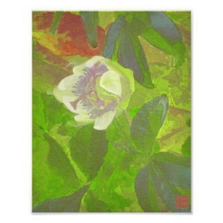 Floral Rhapsody in Green Photograph