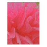 Floral Rhapsody in Magenta and Red Postcard