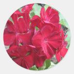 Floral rojo de la planta del geranio pegatina redonda