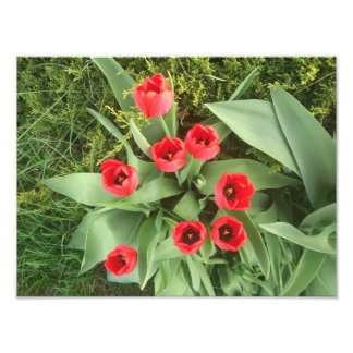 Floral rojo fotografía