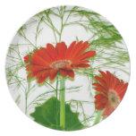 Floral rojo platos de comidas