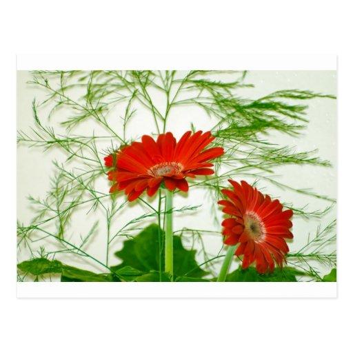 Floral rojo tarjeta postal