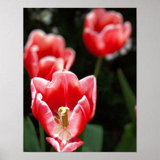 Floral rosado poster