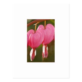 Floral rosado tarjetas postales