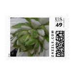 Floral Small Size Postage Stamp