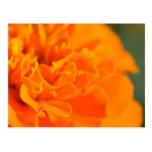 Floral soleado postales