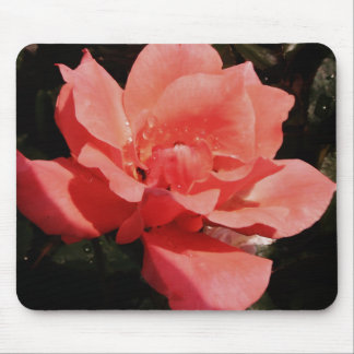 Floral subió rosa bonito del melocotón