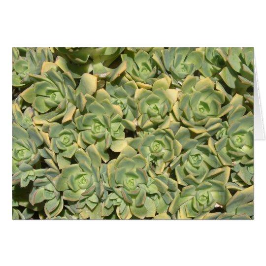 Floral Succulents Card