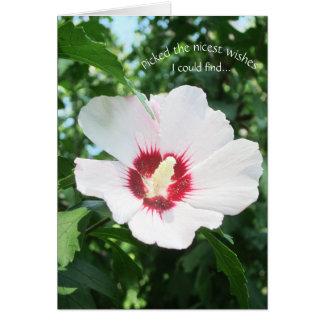 Floral Summer Flower Rose of Sharon Get Well Bloom Card