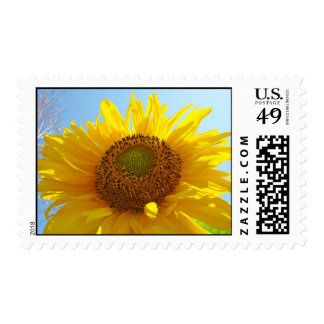 Floral Sunflower postage stamps Summer Flowers