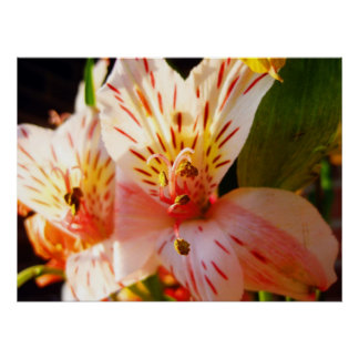 Floral Suprise Poster