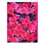 Floral Tarjeta Postal