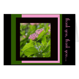 Floral Thank You, Pink Penta on Green Pink Black Card