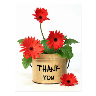 Floral Thank You Red Gerbera Daisy Flower Postcard