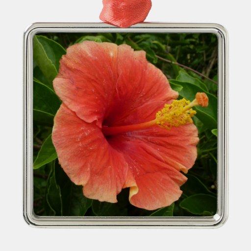 Floral tropical de la flor anaranjada del hibisco adorno cuadrado plateado