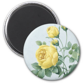 Floral vintage magnet w/ beautiful yellow rose