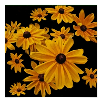 Floral Yellow Black Eyed Susan Flowers Posters