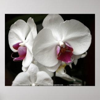 Floralscape/JDA030408109 Poster