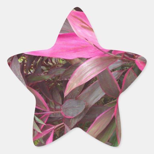 Floras Bolivianas Pegatina Forma De Estrella Personalizada