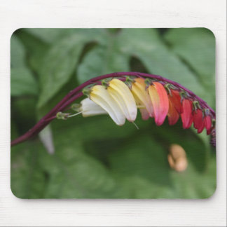 FLORAS FEAST EXOTICA MOUSE PAD